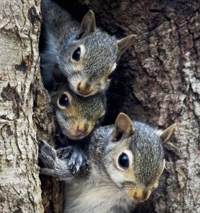 squirrelfamilycrop
